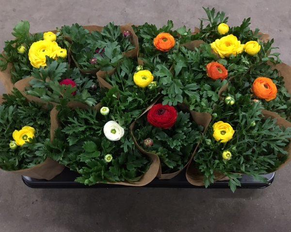 Handel in bloemen en planten begin 2017 positief!